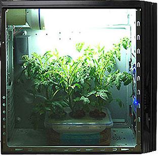 Grow cabinets